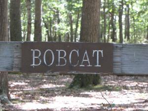 Bobcat Tent Site