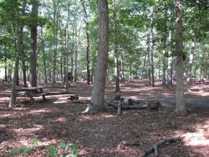 Hendrickson Area Camp Site 6