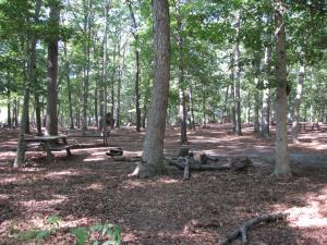 Hendrickson Area Camp Site 2