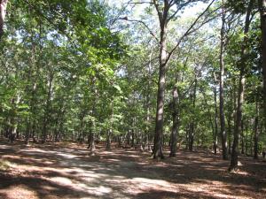 Hendrickson Area Camp Site 3