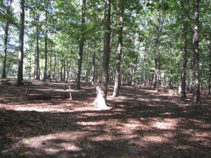 Hendrickson Area Camp Site 4